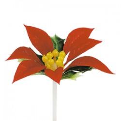 Flor de Natal ( Poinsettia)