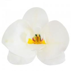 Orquideas Brancas de Hóstia Cx.10