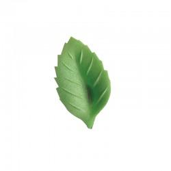 Folhas de Hóstia